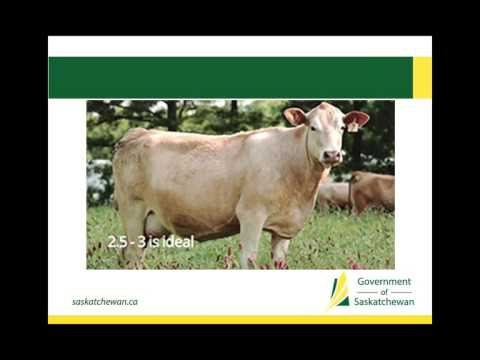 How to improve weaning weights, conception rates, and calf health  (BCRC webinar recording)