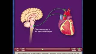 Chemoreceptor Reflex Control of Blood Pressure