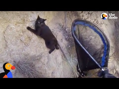Cat Who Hates Parties Rescued From 100 Foot Cliff | The Dodo
