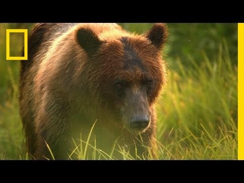 Video: Bear Encounters in the Tongass National Forest