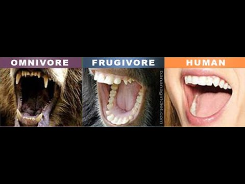 """The Human Diet - We Are Frugivores Not Omnivores Like We Are Programmed - Raw Fruit """"Vegan"""""""