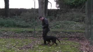Tess At Leeds Dog & Puppy Training