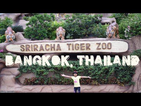 SRIRACHA TIGER ZOO PATTAYA | THAILAND | BANGKOK | World Tour | International Holidays|