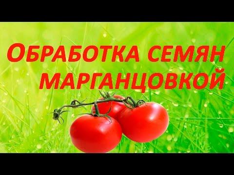 Как опрыскивать помидоры борной кислотой?