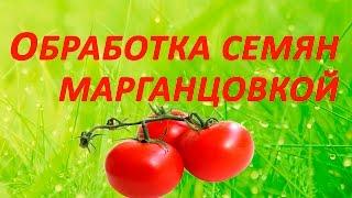 видео Протравливание семян помидоров