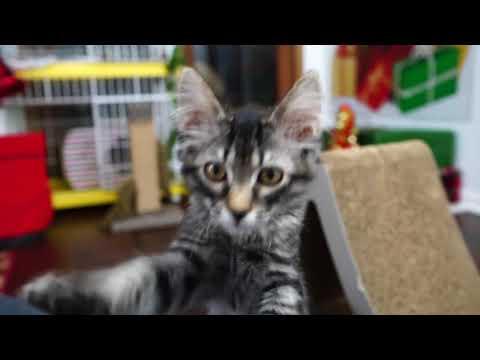 Kitten Close Up 2017-12-21