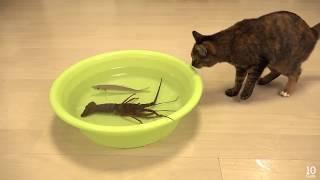 شاهد الفيديو لتعرف حقيقة القطط