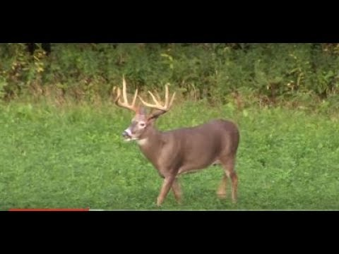 Buck Rammerz / Two Big Wisconsin Whitetails 2016