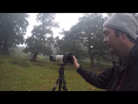 Wildlife Photography: shutter speed, aperture, exposure, iso,