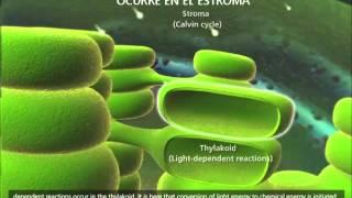 Suelo , Microorganismos , Fotosíntesis, Proteínas , Semillas , Frutos de las Plantas