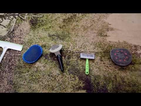 Как очистить ковер от шерсти животных нестандартным методом
