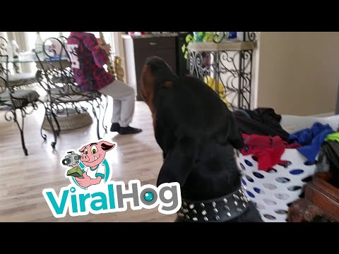 Dog Howls for the Saxophone || ViralHog