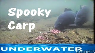 Spooking off the rig underwater carp fishing