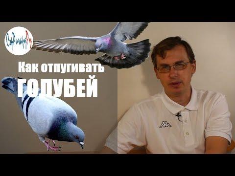 Как отпугивать голубей - средства и их использование