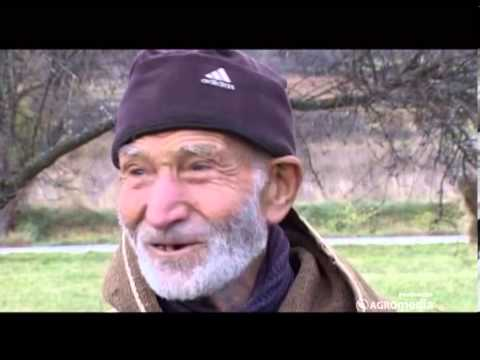 Deda Rada - ovčar od 100 leta