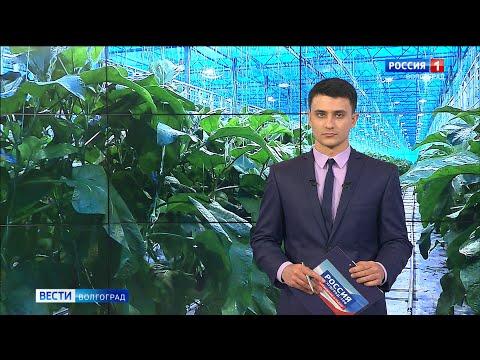 Вести-Волгоград. Выпуск 22.01.20 (17:00)
