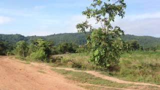Landscape of potato farm, mountain, rural road, forest, ទេសភាពចំការដំឡូង ភ្នំ ផ្លូវលំ ព្រៃ