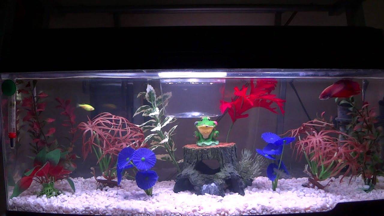 my betta glofish setup