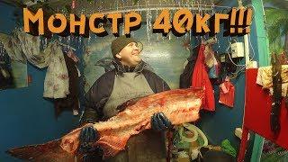 Как лучше всего разделать рыбу. Обвалка рыбы. Толстолоб 40кг. Почти тунец