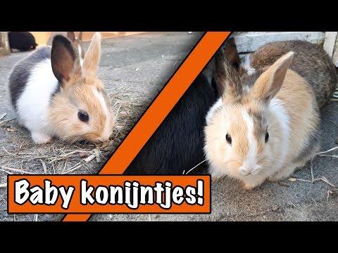 Richard bezoekt baby konijntjes   DierenpraatTV