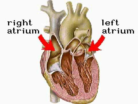 How The Body Works Inside The Heart Youtube