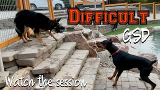 Wild session with a young people and dog reactive German Shepherd