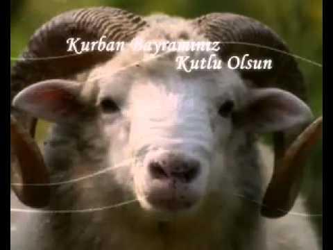 Kurban Bayrami Kutlama Flv Youtube