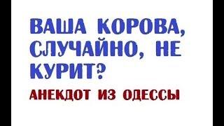 Ваша корова, случайно, не курит? | Анекдот из Одессы<