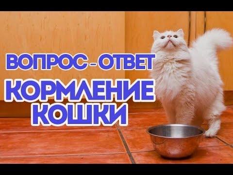 Вопрос: Кошка постоянно просит влажный корм. Что делать?