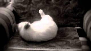 Кошачий оргазм