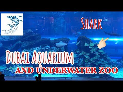 DUBAI AQUARIUM AND UNDERWATER ZOO | DUBAI MALL