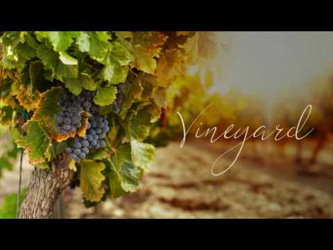 Vineyard - The Laborers in the Vineyard