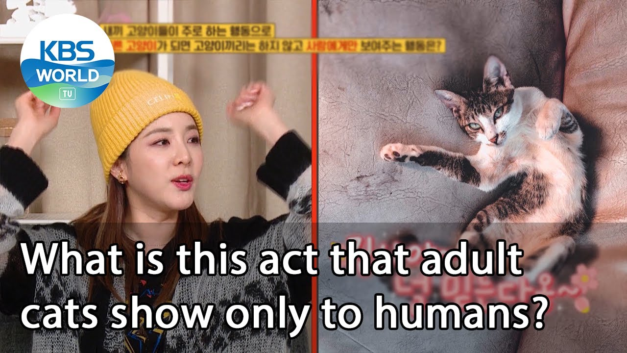 Download What is this act that adult cats show only to humans? (Problem Child in House) | KBS WORLD TV 210115