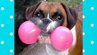 Stupid Dogs Doing Weird Things COMPILATION #4 ★ Funny Dogs Video