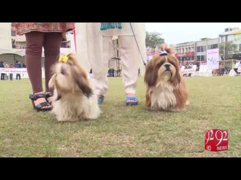 Dog Show held in Lahore 15-01-2017 - 92NewsHD - YouTube