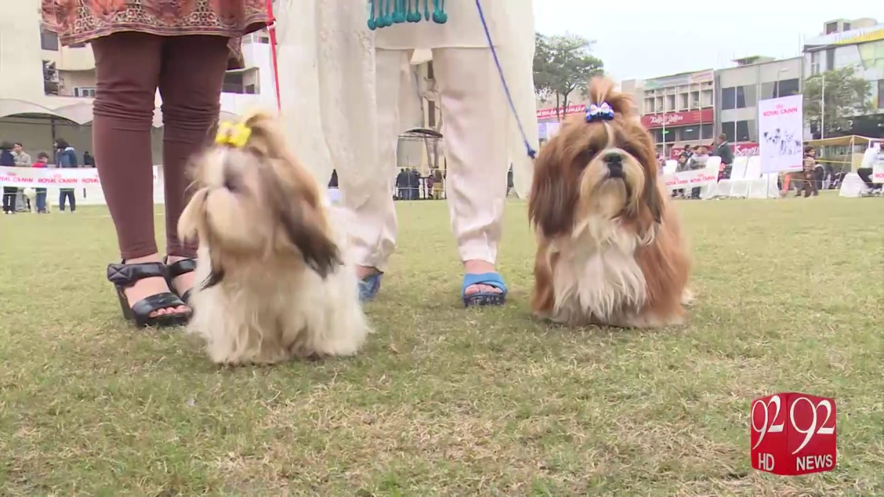 Dog Show held in Lahore 15-01-2017 - 92NewsHD