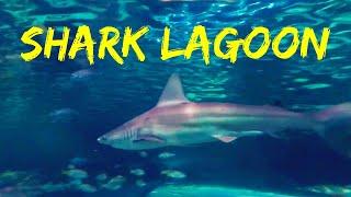 🦈 Inside the Shark Lagoon