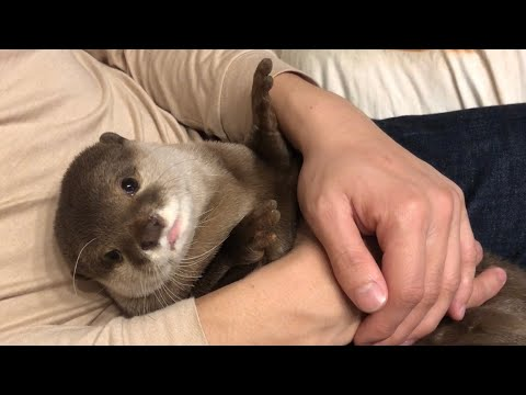 The Ace & TJ Show - Proof That Otters are EXTREMELY Cute