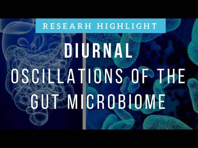 Diurnal Oscillations of the Gut Microbiome | Research Highlight