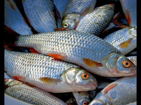 Уловистая прикормка для мирной рыбы. Карась.Лещ. Плотва. Карп.