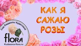 Сад Людмилы Кудасовой. Как я сажаю Розы