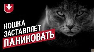 Как в боевике: английская кошка обратила в панику бультерьера и его хозяина