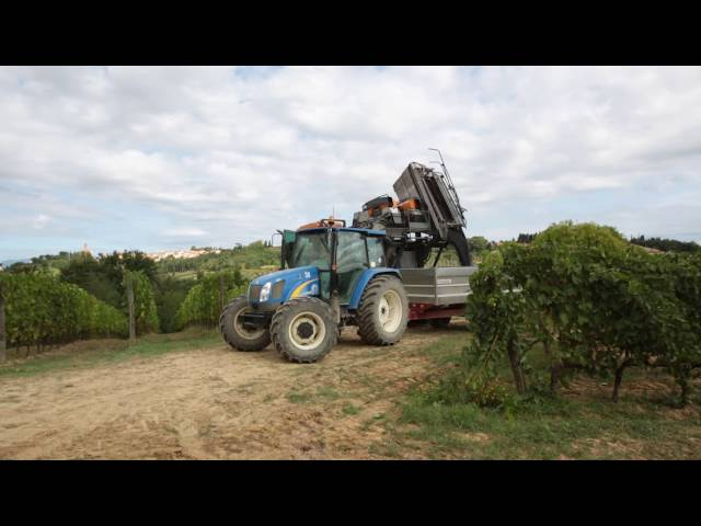 BKT Radial Harvesting Tires || Agrimax RT 765 || Vineyard in Tuscany, Italy