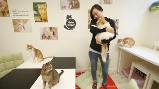 明愛Gato House貓貓輔助吸毒者