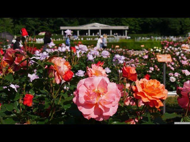 JG 4K HDR 東京 春の神代植物公園 Tokyo,Jindai Botanical Garden in Spring