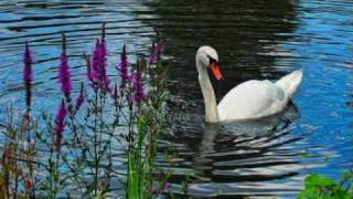 Eroc - Vogelfrei