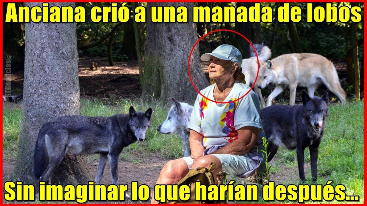 Anciana crió a una manada de 5 lobos, pero nunca imaginó como se lo pagarían.