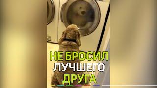 Пользователей растрогал пёс, который очень переживал за судьбу своего плюшевого медведя