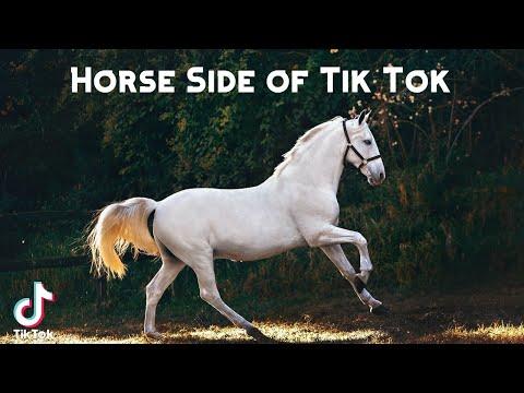 Horse Side of Tik Tok