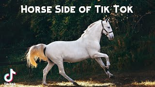Horse Side of Tik Tok